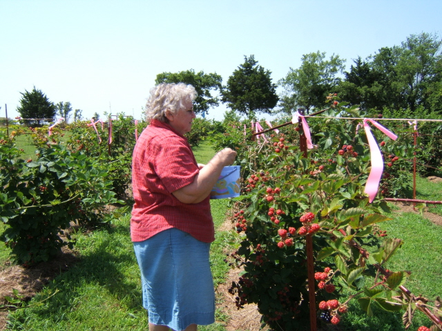 DeEtta picking berries