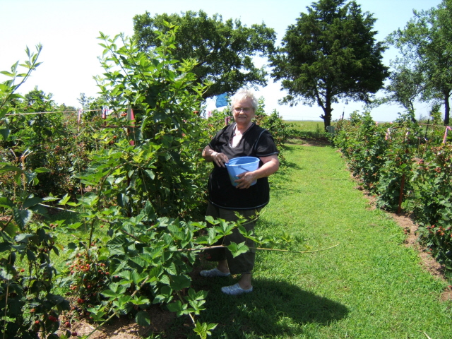 Lucille picking in June 2008